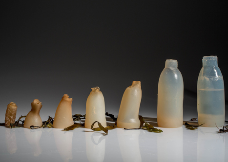 Ari Jónsson uses algae to create biodegradable water bottles | Marine Litter | Scoop.it