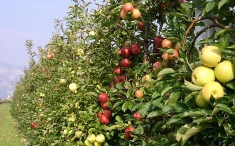 www.ladigetto.it - Fondo Euregio finanzia ricerca su biodiversità e mele | Fondazione Mach | Scoop.it