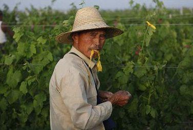 Vignobles du monde : La Chine - Magazine du vin - Mon Vigneron | Actualités du Vin | Scoop.it