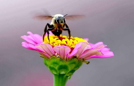 Disparition des insectes : une catastrophe silencieuse | CDI RAISMES - MA | Scoop.it
