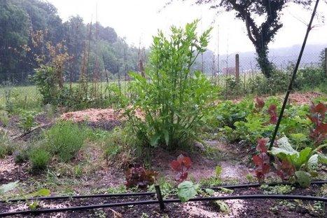 Malgré la pluie, le Jardin sans pétrole s'épanouit en couleurs   Les colocs du jardin   Scoop.it