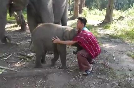 Baby Elephant Loves Cuddling ♥ | Brain Compatible Classrooms | Scoop.it