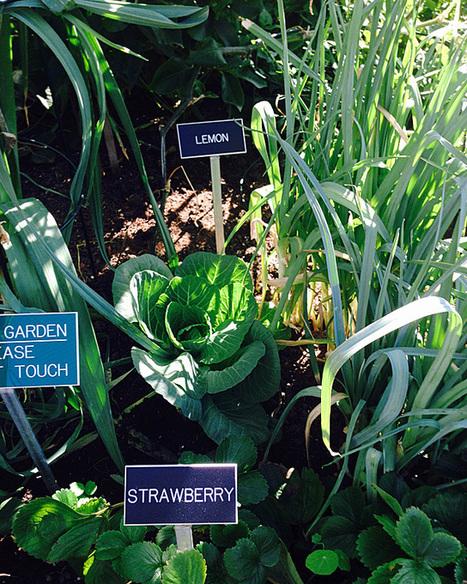 PHOTOS: AT&T Park's edible garden in center field   edible landscaping   Scoop.it