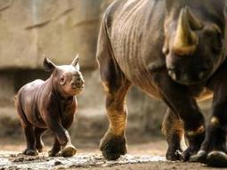 Suspected rhino poachers in court | What's Happening to Africa's Rhino? | Scoop.it