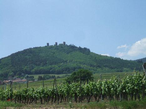 In vino veritas – L'AcquaBuona » Prima pagina » Wine Tasting ... | Wine in Tuscany | Scoop.it