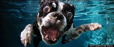 Underwater Dogs: The book, the calendar - ohmidog! | Underwater Photography | Scoop.it