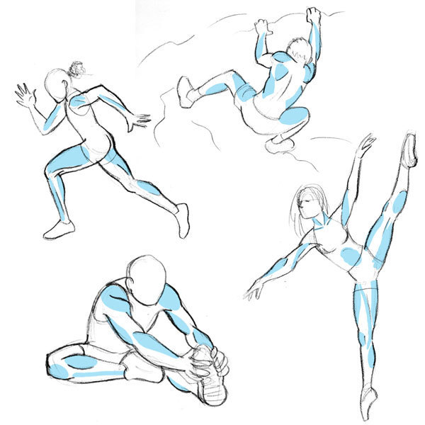 Human Anatomy Fundamentals Muscles And Other B...