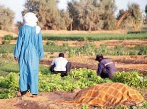 Algérie : Comment faire du Sahara une vraie Californie