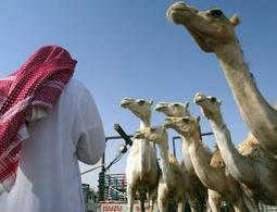 Avoid camels to escape MERS, warns Saudi minister - health - 29 April 2014 - New Scientist   MERS-CoV   Scoop.it