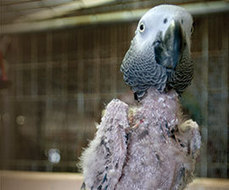 No-Fly Zone: Denied Their Natural Habits, Millions of Pet Parrots Lead Bleak, Lonely Lives : The Humane Society of the United States | Parrot Partner | Scoop.it