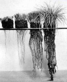 Creating New Soil, By Christine Jones | Organic Farming | Scoop.it