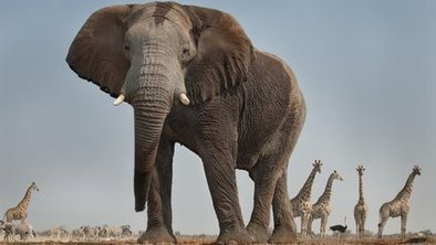 Letter from Africa: Elephant in the room | Global Politics - Yemen | Scoop.it