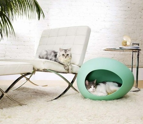 Home Tips for Pet Owners | My Decorative | All For The Home | Scoop.it