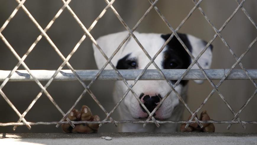 France: les adoptions d'animaux en hausse, les abandons aussi