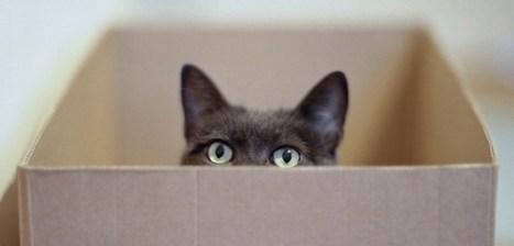 Copy Cat, la primera mascota clonada del mundo | Bichos en Clase | Scoop.it