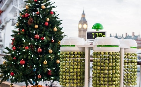 How to light a Christmas tree using Brussels sprouts - Telegraph | @FoodMeditations Time | Scoop.it
