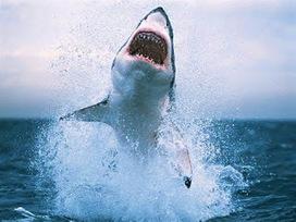 SCUBA SCOOP/latest dive stories: 10 Facts About Sharks | Totalmente Natura | Scoop.it