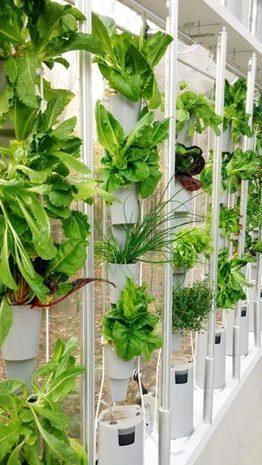 The Windowfarms™ Store | Vertical Farm - Food Factory | Scoop.it