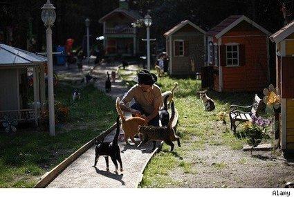 Florida Man Wants His 700 Cats Back   Feline Health and News - manhattancats.com   Scoop.it