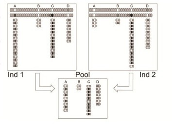 To Pool or not to Pool | RNA-Seq Blog | Bioinformatics, Comparative Genomics and Molecular Evolution | Scoop.it