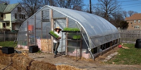 Urban farms are on the rise, already feeding 1/5 of the world | Revitalization News | Cultivos Hidropónicos | Scoop.it
