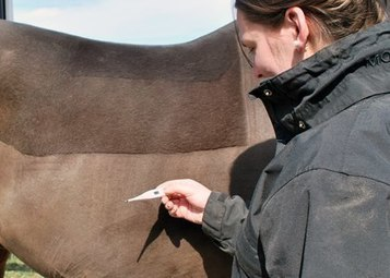Does My Horse Have a 'Cold'? | Equine matters | Scoop.it