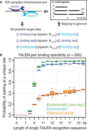 An efficient strategy for TALEN-mediated genome engineering in Drosophila | Multi- gene | Scoop.it