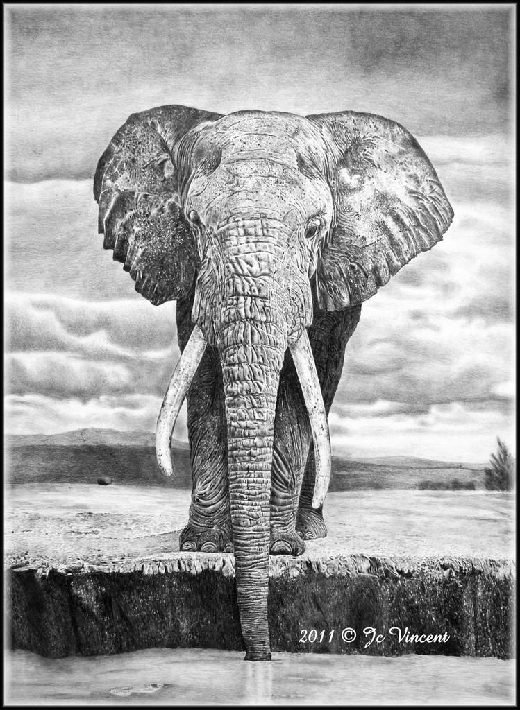 Mon dessin d 39 l phant des savanes - Dessin d elephant ...