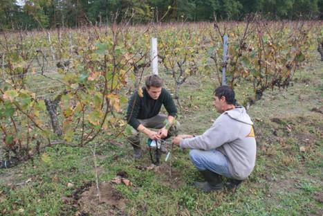 Viticulture : des solutions pour limiter les risques - Le Républicain | Agriculture en Gironde | Scoop.it