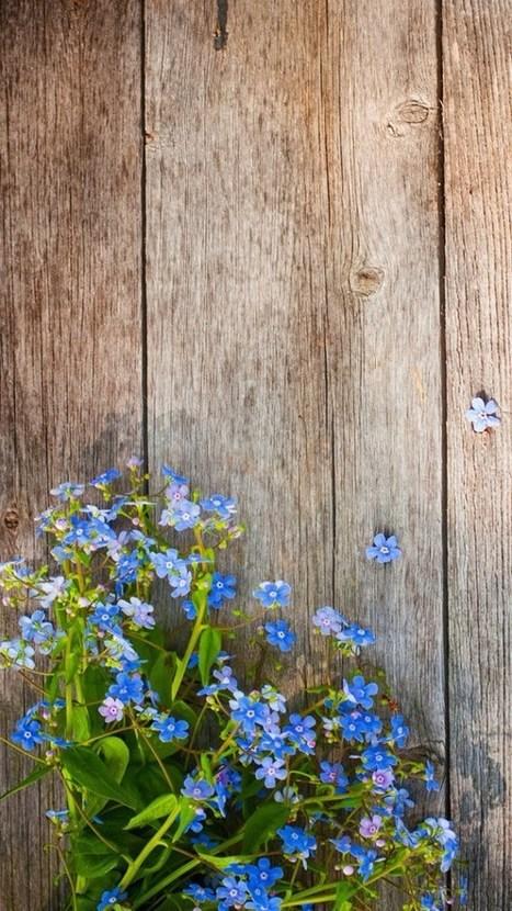 Spring Iphone 7 Wallpaper