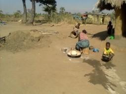 Moringa gaining ground in Malawi   Miracle Moringa   Scoop.it