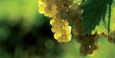 Les métiers de la vigne et du vin vous attirent? | Vos Clés de la Cave | Scoop.it