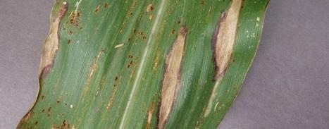 Smartphones Enlisted to Battle Crop Disease   AgroWorld - April   May 2016   Scoop.it