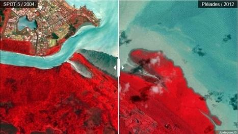 L'incroyable dynamique de la mangrove de Kourou | Biodiversité & Relations Homme - Nature - Environnement : Un Scoop.it du Muséum de Toulouse | Scoop.it