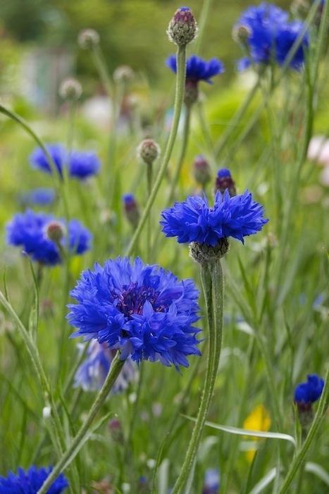 Two Gardens: Monet's Garden in pictures - Vandy Massey | ACANTO Green News | Scoop.it