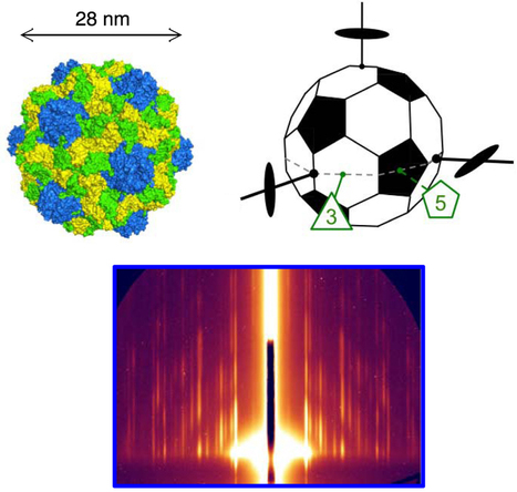 Two-dimensional crystalline structure assembled from outer shells of a virus   Amazing Science   Scoop.it