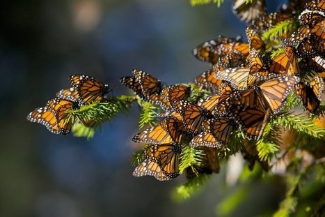 Report: More Pollinator Species In Jeopardy, Threatening World Food Supply | Sustainable Futures | Scoop.it