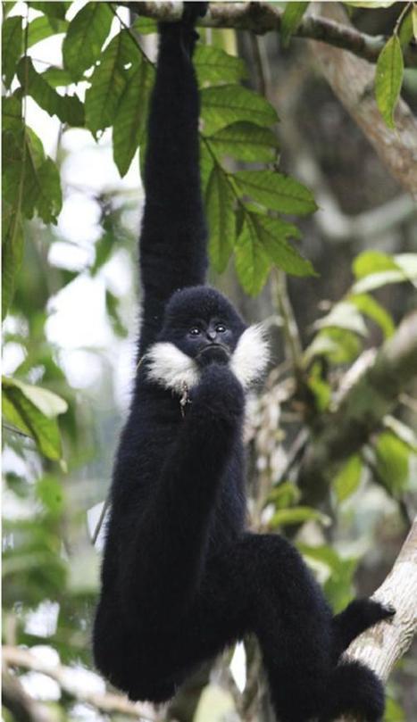 El acelerado declive de los primates | Bichos en Clase | Scoop.it