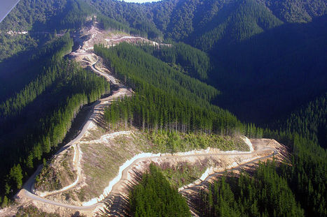 Import Value of Logs and Lumber to China Falls 25% in 12  Months   Timberland Investment   Scoop.it
