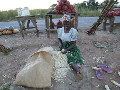 Industrial Agriculture: Too Big to Succeed | Questions de développement ... | Scoop.it