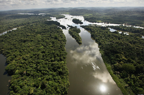 The Conservation Crisis Is a Spiritual Crisis | Biodiversity IS Life  – #Conservation #Ecosystems #Wildlife #Rivers #Forests #Environment | Scoop.it