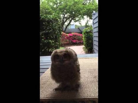 Angry Young Owl Surprises Some Nice Suburban Housewives | Pet Sitter Picks | Scoop.it