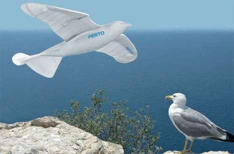 Robotic Birds | Robotics Frontiers | Scoop.it