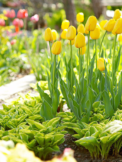 Designing with Spring Bulbs | Landscape Creative Inspiration | Scoop.it