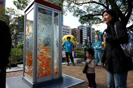Les cabines téléphoniques deviennent des aquariums | Les tendances déco-design de Moodds | Scoop.it