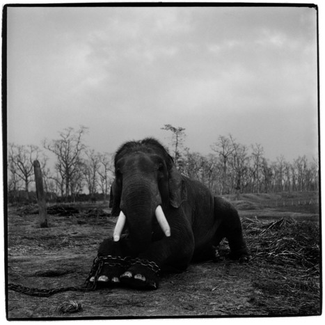 Trading to Extinction | Photojournalist: Patrick Brown | BLACK AND WHITE | Scoop.it
