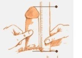 The moir jessel brain sex test