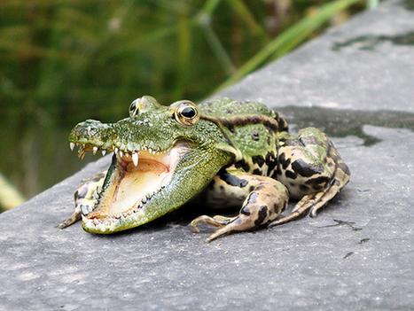 Learn How to Combine a Crocodile and a Frog in Photoshop   Photoshop   Scoop.it