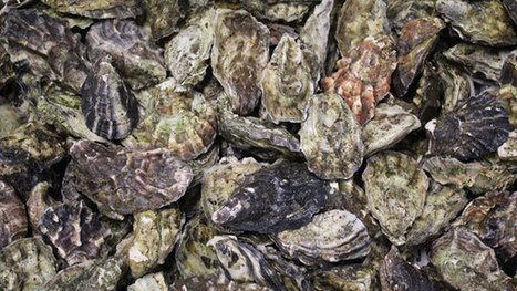 Oyster Hunting At Bedruthan Steps | Education, Eco and Tech Info | Scoop.it