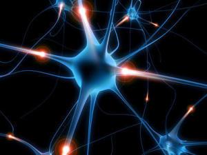 Scientists reveal molecular sculptor of memories | Cognitive Science | Scoop.it